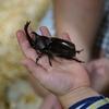 生きたカブトムシと触れ合える! 「大昆虫展in東京スカイツリータウン」に行ってきた