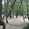 6月末、梅雨の晴れ間、津田の松原