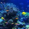 【無料/フリーBGM素材】海底探索、おしゃれバー、水族館『サンゴと貝』アクアリウム