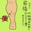 膀胱経(BL)58 飛揚(ひよう)