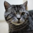 トリコロールな猫/セキュリティ