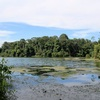 Vol.2 Macritchie Nature Trail/シンガポール
