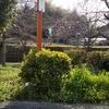 桜もチラホラ