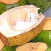 「COCONUT SASHIMI(ココナッツ刺身)」を食べました