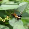 真夏の厚着、ハチ擬態。。