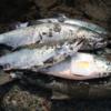 砂浜・鮭釣り攻略法/   今日の紋別
