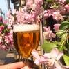 ひとこと近況報告❀桜とビール