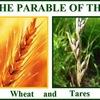 良い麦と毒麦の譬え    〜マタイ13:24~30〜
