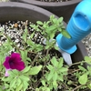 NHK趣味の園芸「もう一花 咲かせよう! 春&夏の花」ペチュニア