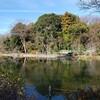 善福寺公園の巨木(昼下りPart2)