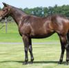 シルク15年産一口初心者全馬評価28 ツィンクルブーケの15