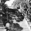 六甲の森と大阪湾の誕生