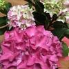母の日に、娘に花を贈る母、ん?