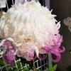 「移ろい菊」を見つけた話。 ~ちょっと雅な気持ちになれた気がする♪~