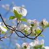 春の於大公園(2)