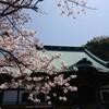 鎌倉桜巡り3 光明寺の桜