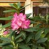 6月の「尼僧と学ぶやさしい仏教講座」は6月17日(日)10時より行います。テーマは「寺院と檀家の関係とは?」です。