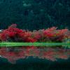 京都・大原 - 大原の郷の霧島躑躅