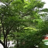 緑が深い霧島散歩