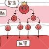 人の血管をつなぎ合わせると長さはどれくらい!毛細血管は赤血球より細い!