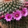 花のかんむり
