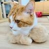 愛猫の抜け毛を集めている方、必読です。
