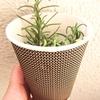 ローズマリーの挿し穂を紙コップ20190215