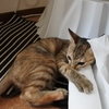 猫砂全取り替えの日