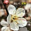 植物に学ぶ生存戦略~梅(ウメ)~面白い戦略を解説します!~山田孝之さんが梅の木の生き残るために様々な工夫を教えてくれました