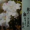 2月10日誕生日の花と花言葉