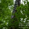 【7月】上州武尊山:ほたか牧場より登る新緑のブナ原生林