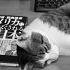 「スマステーション」(テレビ朝日)は9月で終了?