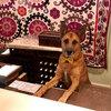 我輩は犬である。お仕事は、ペット・リレーションズ支配人。