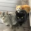 寒の雨と猫家族