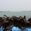 Hokkaido is rich for seaweeds!