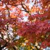 新宿御苑 −November 2017−