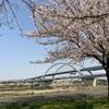 五色桜大橋と宮城ゆうゆう公園  足立区宮城