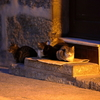 ギマランイスの猫たち