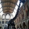 子連れにおすすめのロンドンの美術館・博物館5選 | 観光  イギリス 旅行