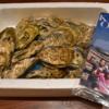 ふるさと納税〜海産物⑤牡蠣 熊本県八代市〜