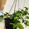 ガーデニングと同じくらい、室内の緑化計画も順調です