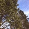 【一日一枚写真】冬の野幌森林公園【スマホ】