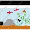 アクアリウム初心者が金魚すくいをして水槽を設置するまで