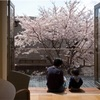 今年も我が家に桜は咲く