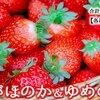 【ふるさと納税】宮崎県都農町より返礼品をいただきました。