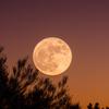 【日本の暦と宇宙の関係】3月の和名「弥生」の由来