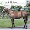 【キャロットクラブ2021募集馬】尺・歩様・動きを評価!(74)▶︎(88)【第二のレイパパレに出資したい…】