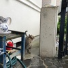 台風12号通過中に脱走をしたプーチンさんすぐ家に戻るw