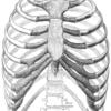 【呼吸】発達と胸郭