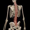 【腰痛予防】多裂筋という筋肉を意識する